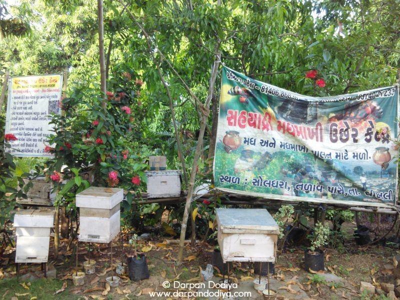 Soldhara Village, Chikhli, Gujarat Eco Point Photos [6]