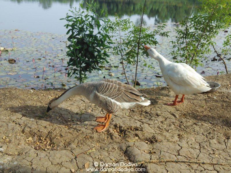 Soldhara Village, Chikhli, Gujarat Eco Point Photos [7]