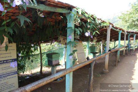 Honey Bees Centre Saputara 3